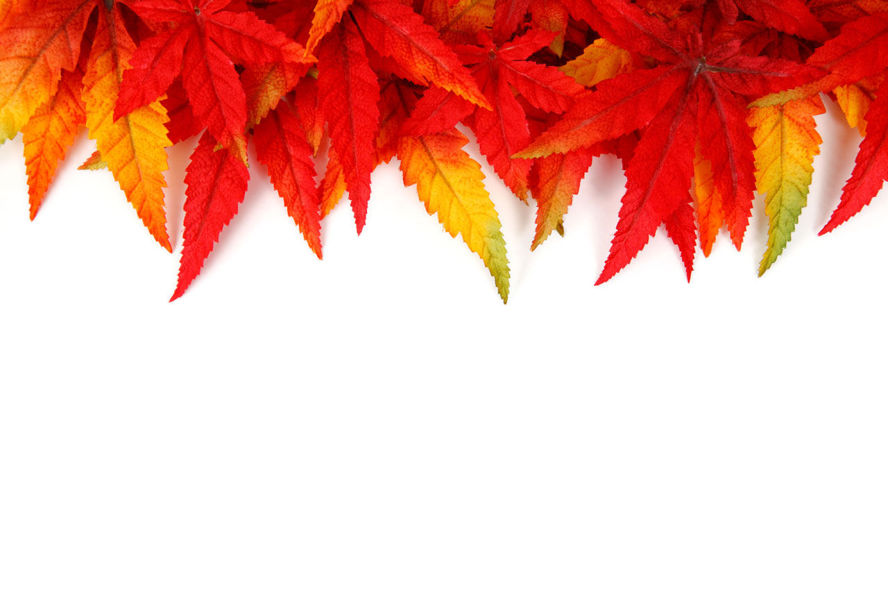 Fall Autumn Leaves Border 1280x853