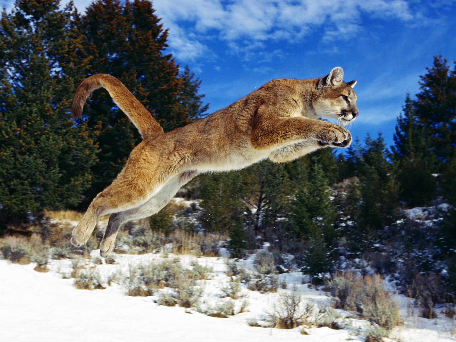 All Wallpapers Wildlife New Nice hd Wallpapers 2013 1600x1200