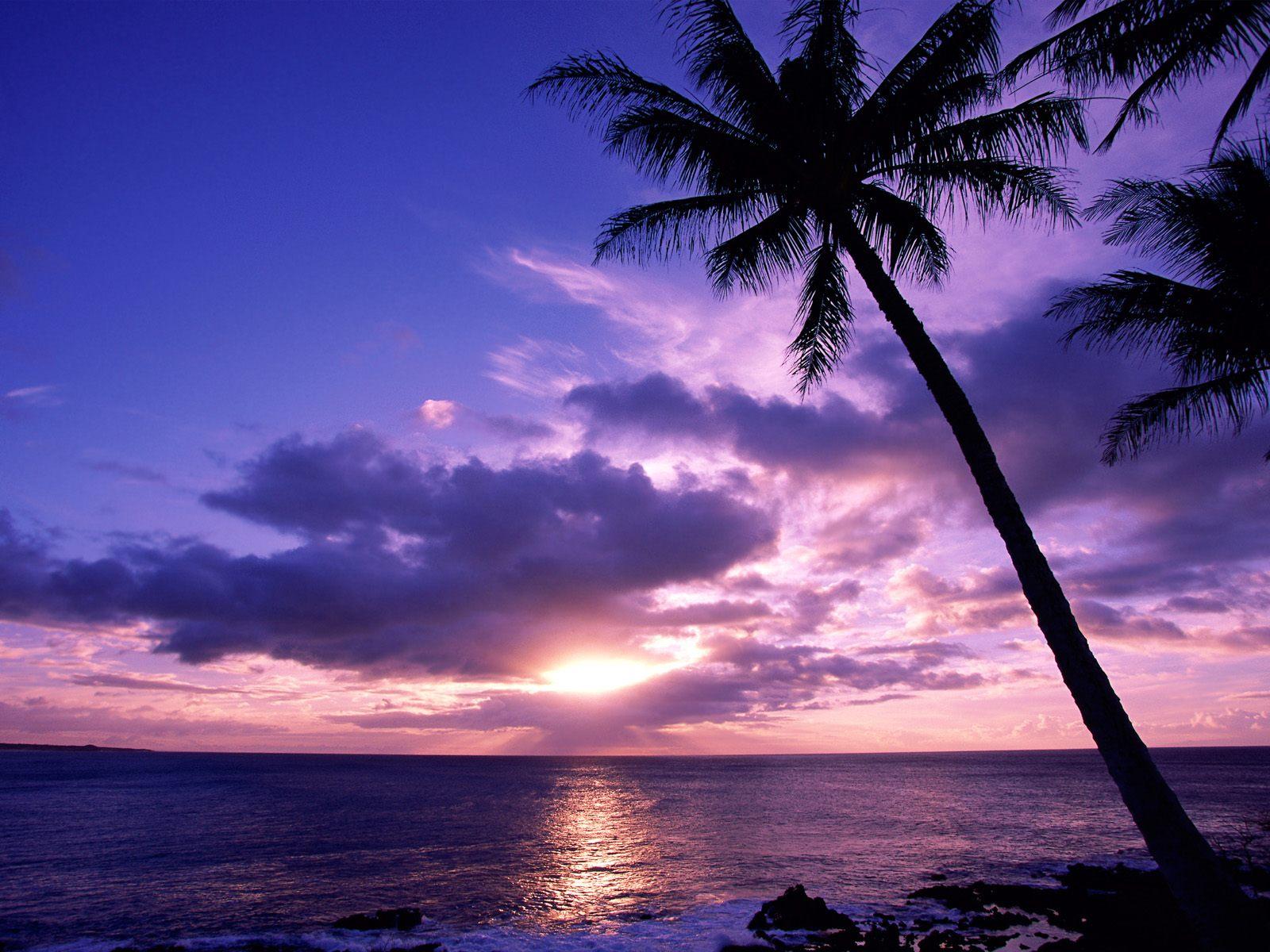 Tropical paradise wallpaper,tropical beaches wallpaper ,Tropical ...