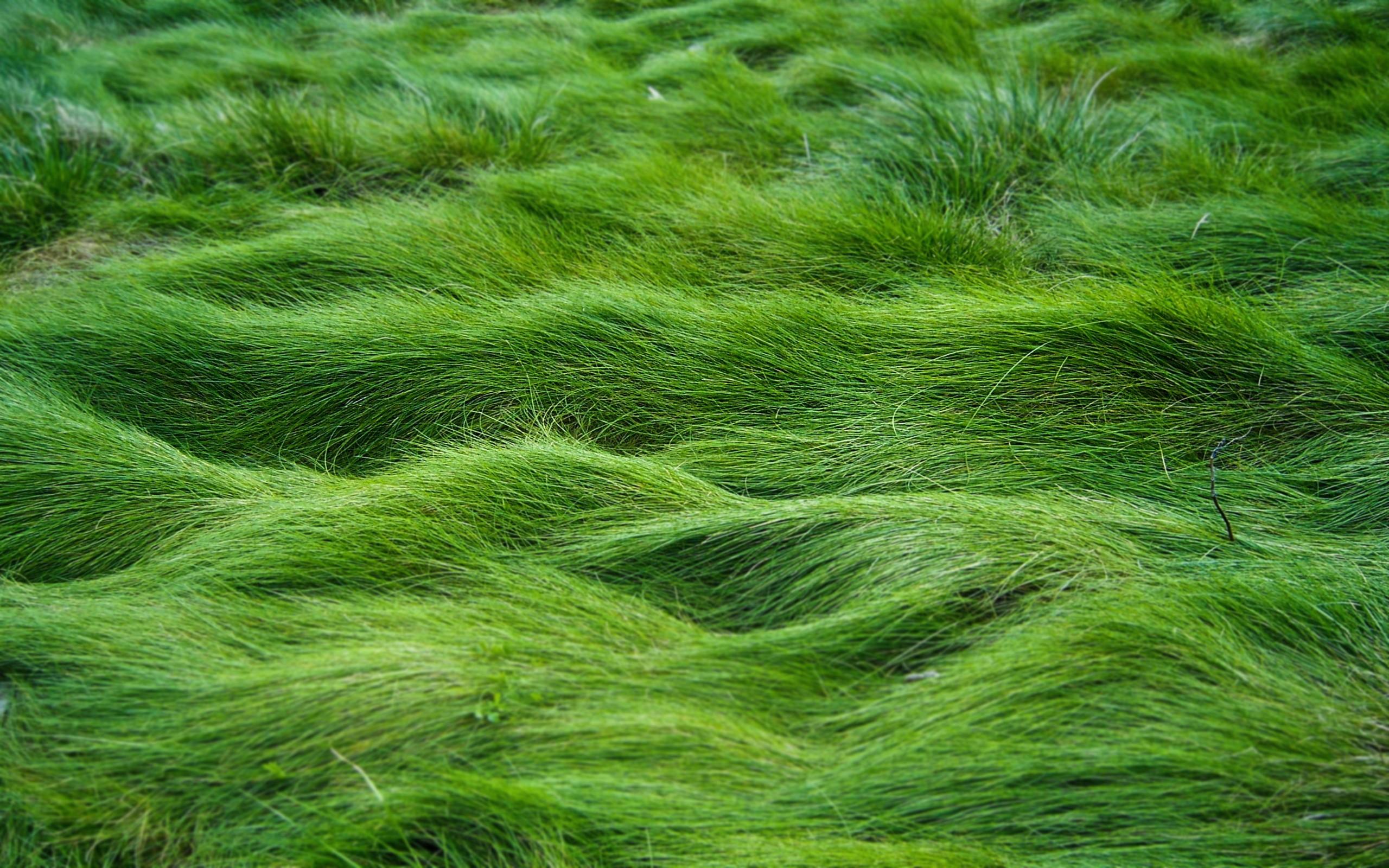 Green Grass Wallpaper HD 13096 Wallpaper Cool Walldiskpapercom 2560x1600