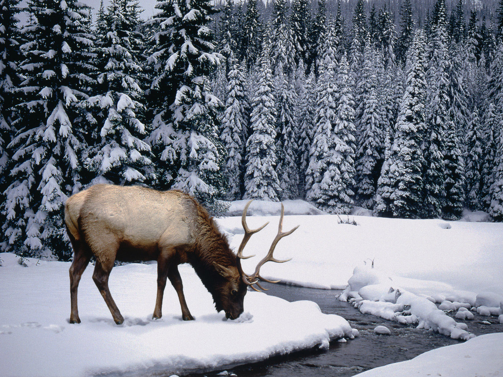Beautiful Winter Wallpaper for Download Webdesign Core 1600x1200