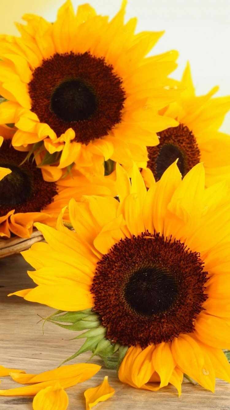Sunflower iPhone Wallpapers   Top Sunflower iPhone 750x1334