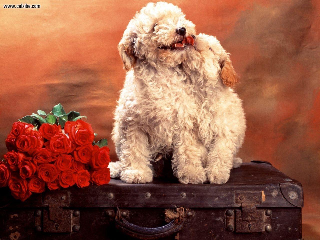 I Love Dogs Wallpaper : I Love Dogs Wallpaper - WallpaperSafari