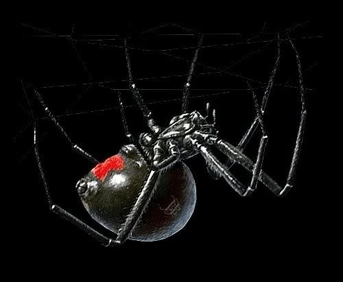 Black Widow Spider Image   Black Widow Spider Picture Graphic 500x411