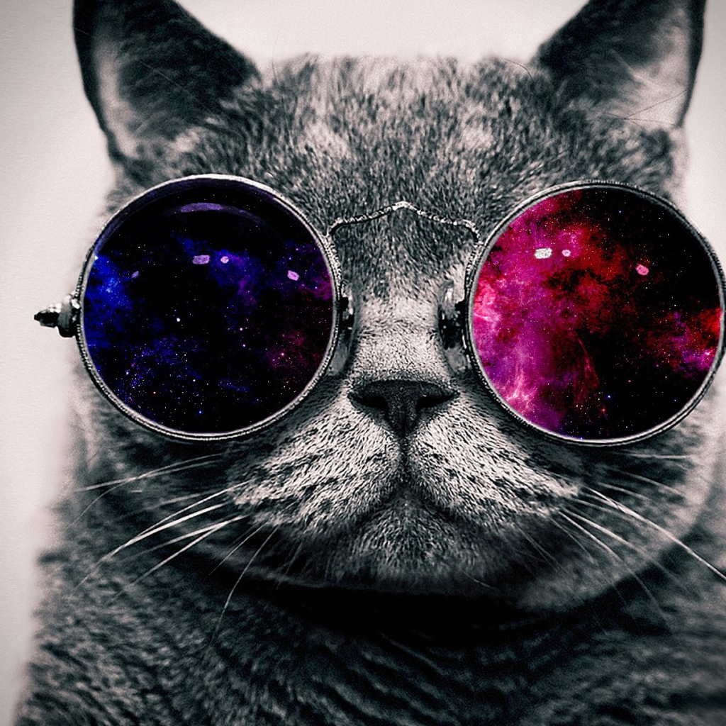 Cat on colored glasses Desktop wallpapers 1024x1024 1024x1024