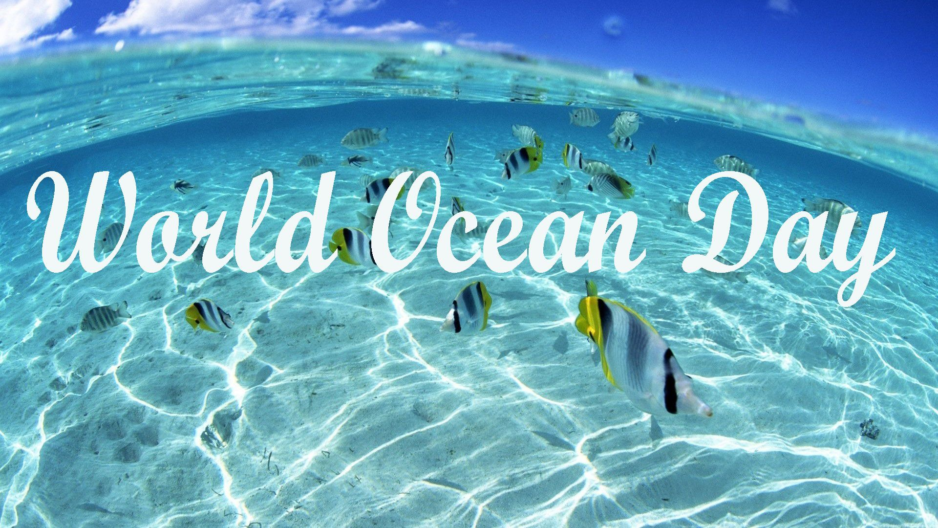 World Oceans Day Naveen pledges to keep blue planet healthy 1920x1080