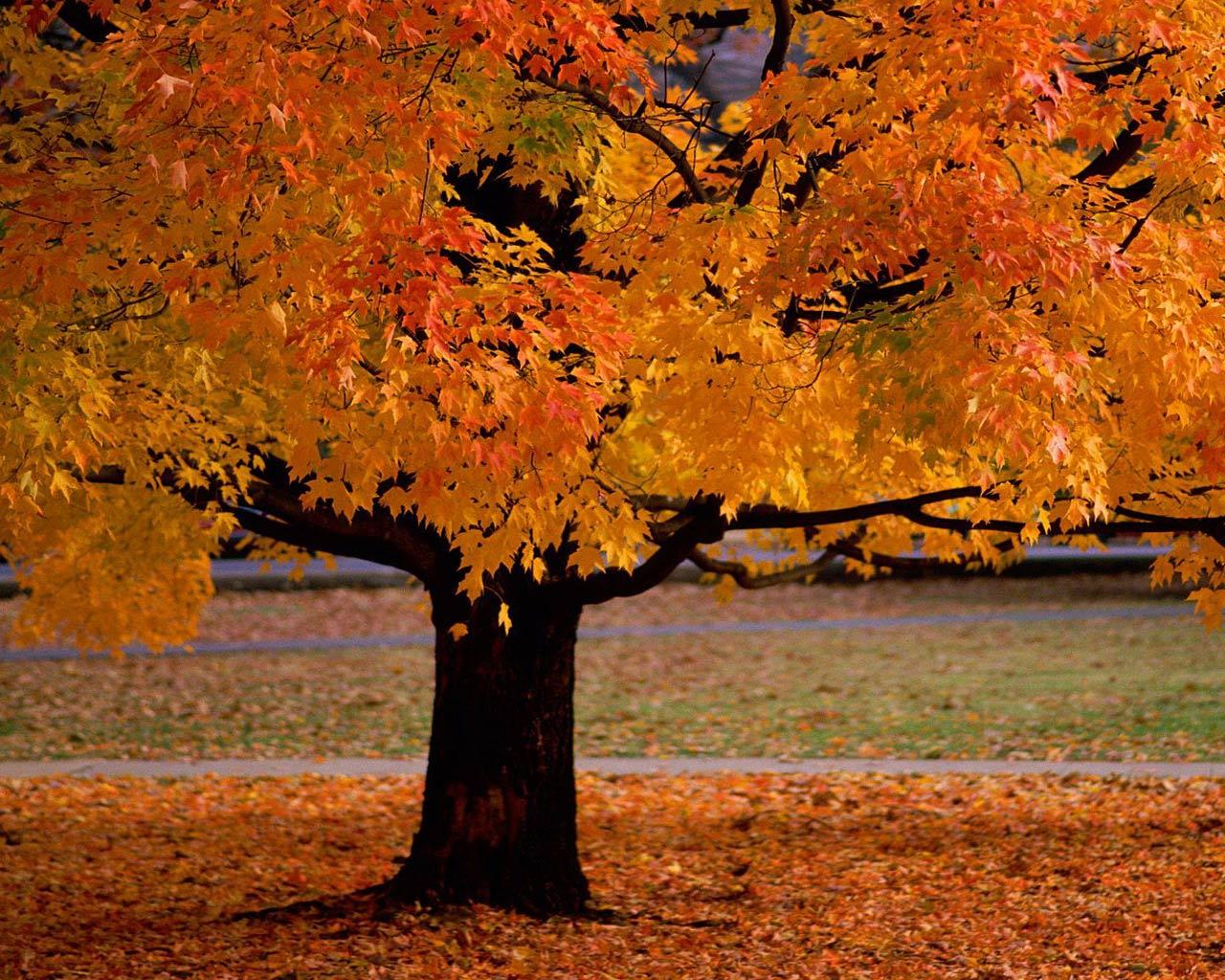 Autumn Trees Desktop Wallpaper Top Quality Wallpapers 1280x1024