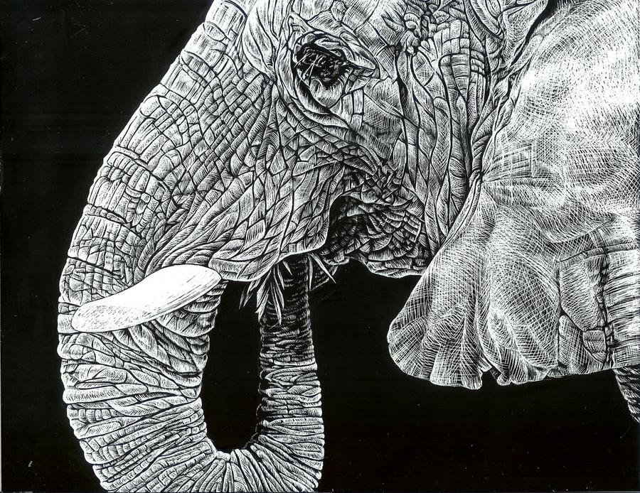 Elephant Skin by GenerallySpeaking 900x694