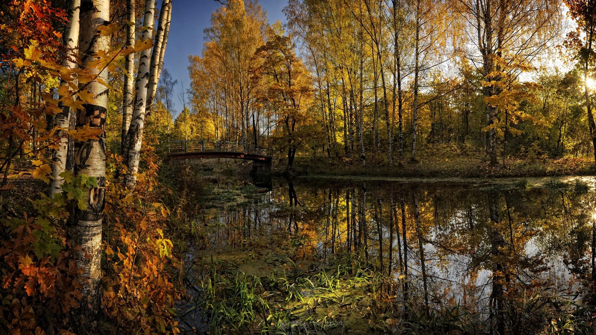 Nexus desktop wallpaper 1920x1080 nature wallpapersafari - Nature background 1920x1080 ...