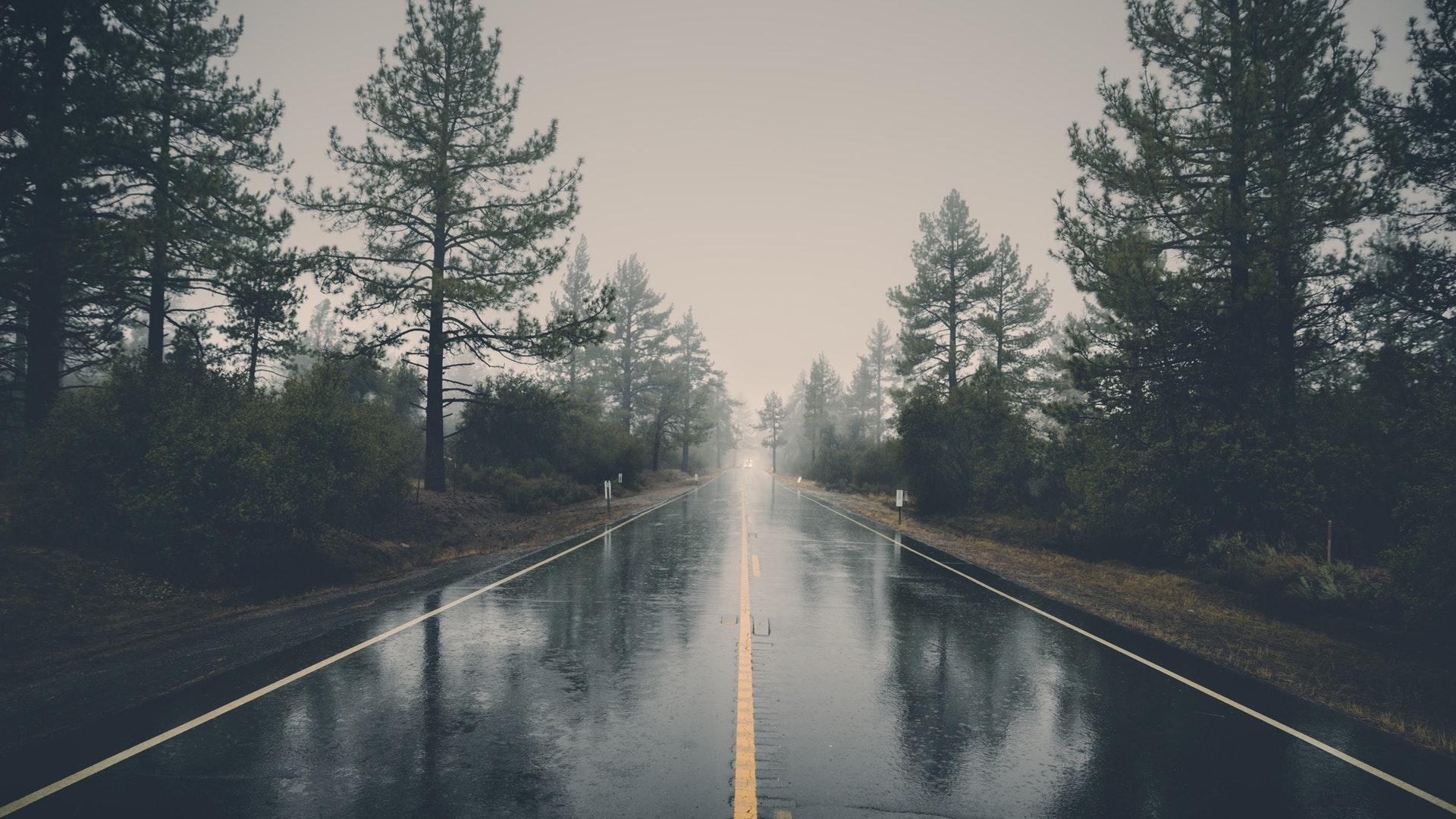 nature mist landscape reflection trees rain forest 1920x1080