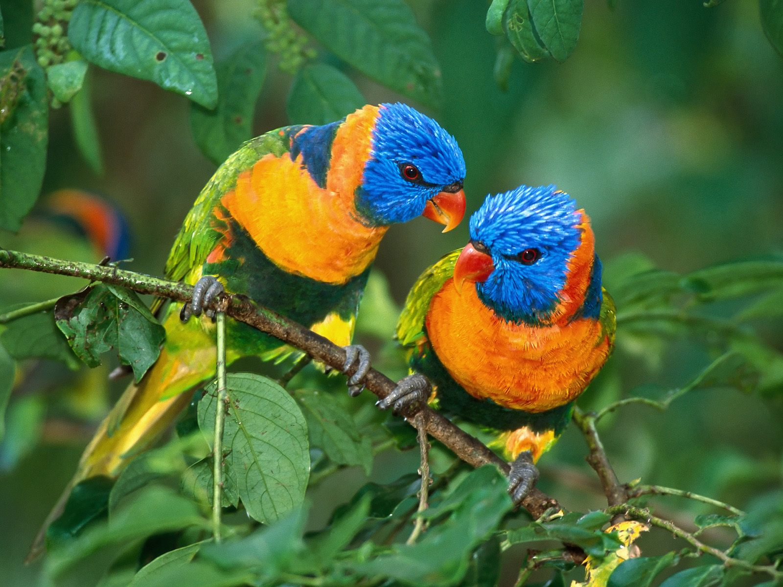 Beautiful Small Birds Wallpapers   Entertainment Only 1600x1200