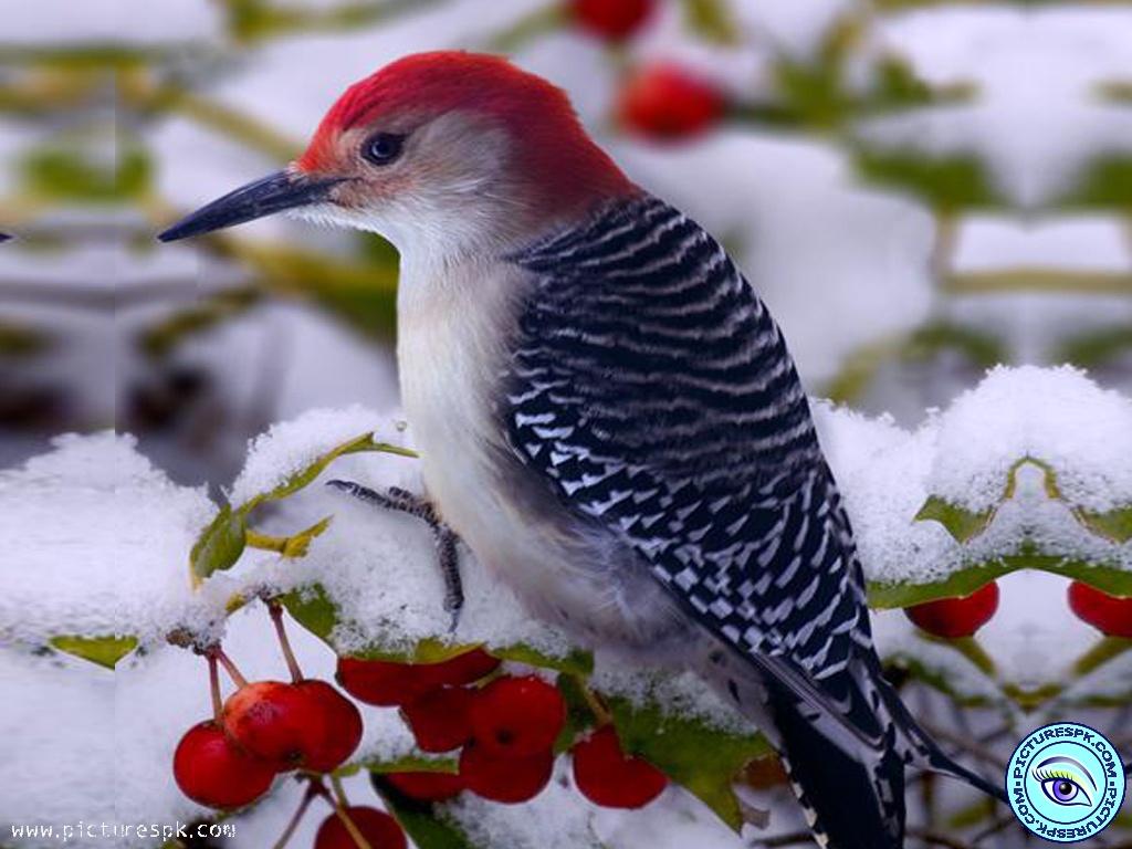 Winter Birds Wallpaper on WallpaperSafari