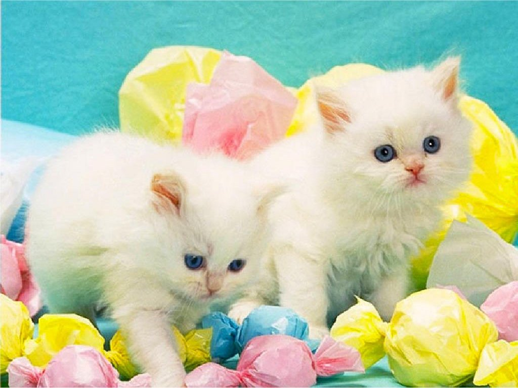 Cute Easter Wallpapers 1024x768