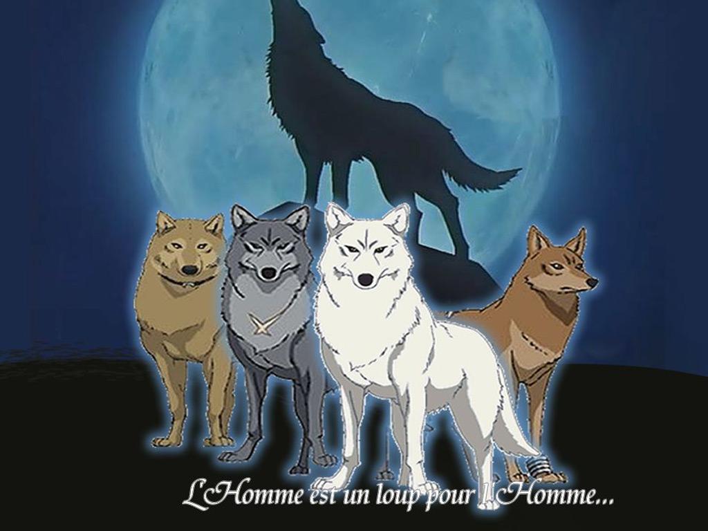 anime wolf wallpaper wallpapersafari