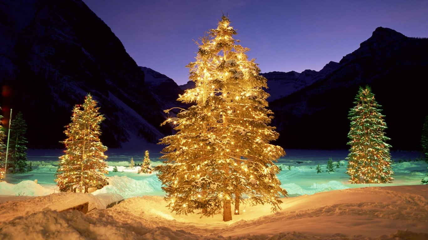 1366x768 Christmas trees in the wild desktop PC and Mac 1366x768
