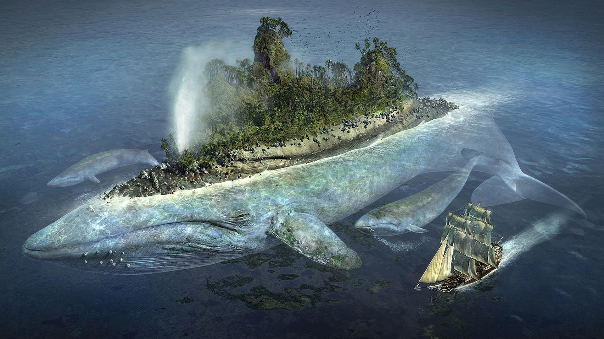 Island Wallpapers, Whale Island Myspace Backgrounds, Whale Island ...