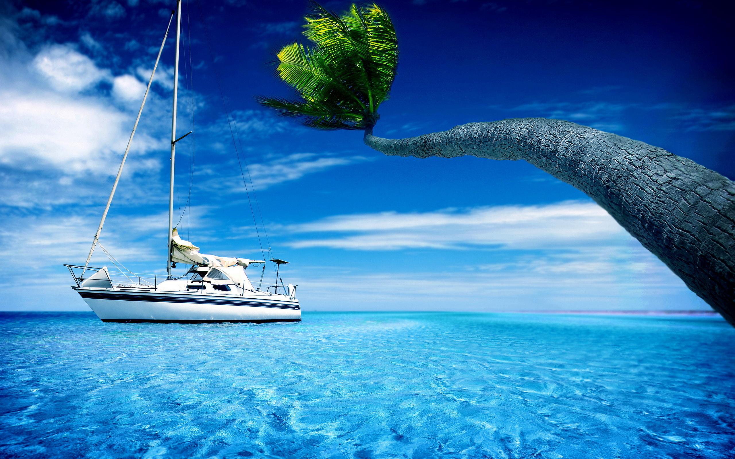 Description Best Palm Ocean Wallpaper is a hi res Wallpaper for pc 2560x1600
