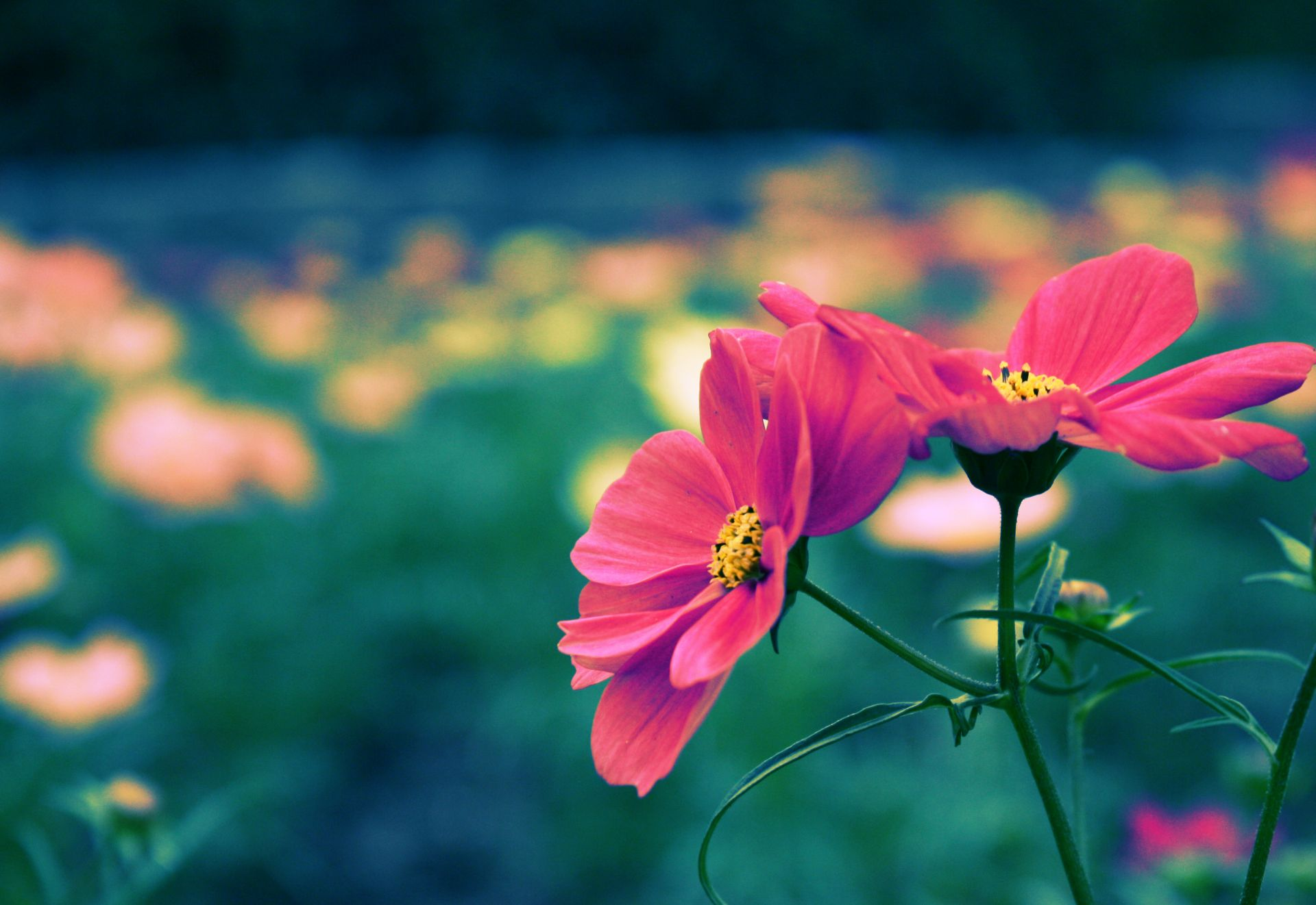 cute little flowers wallpaper - photo #15