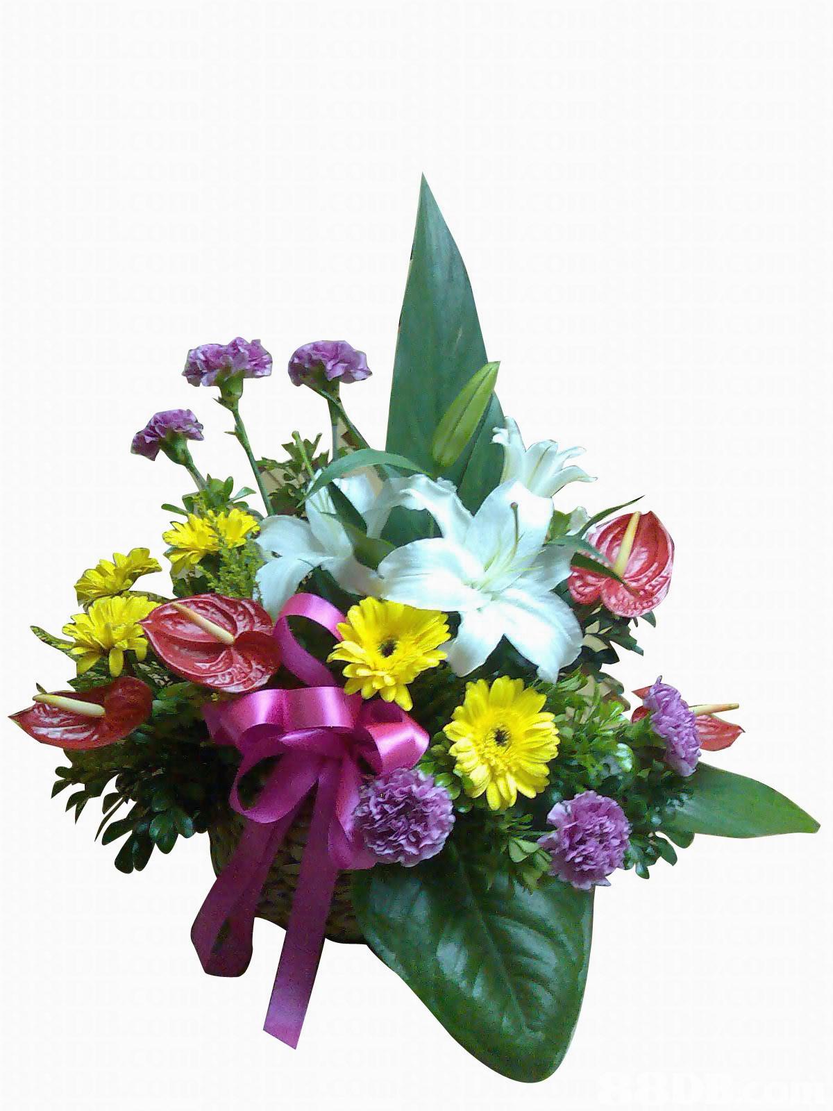 Открытки без лишних слов дарю букет цветов