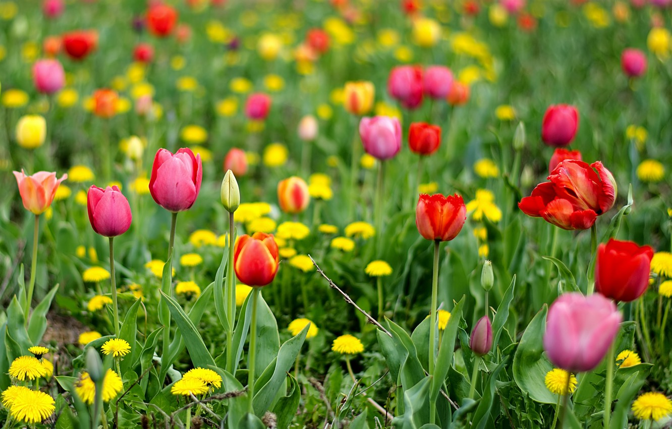 Wallpaper greens field flowers glade bright spring yellow 1332x850