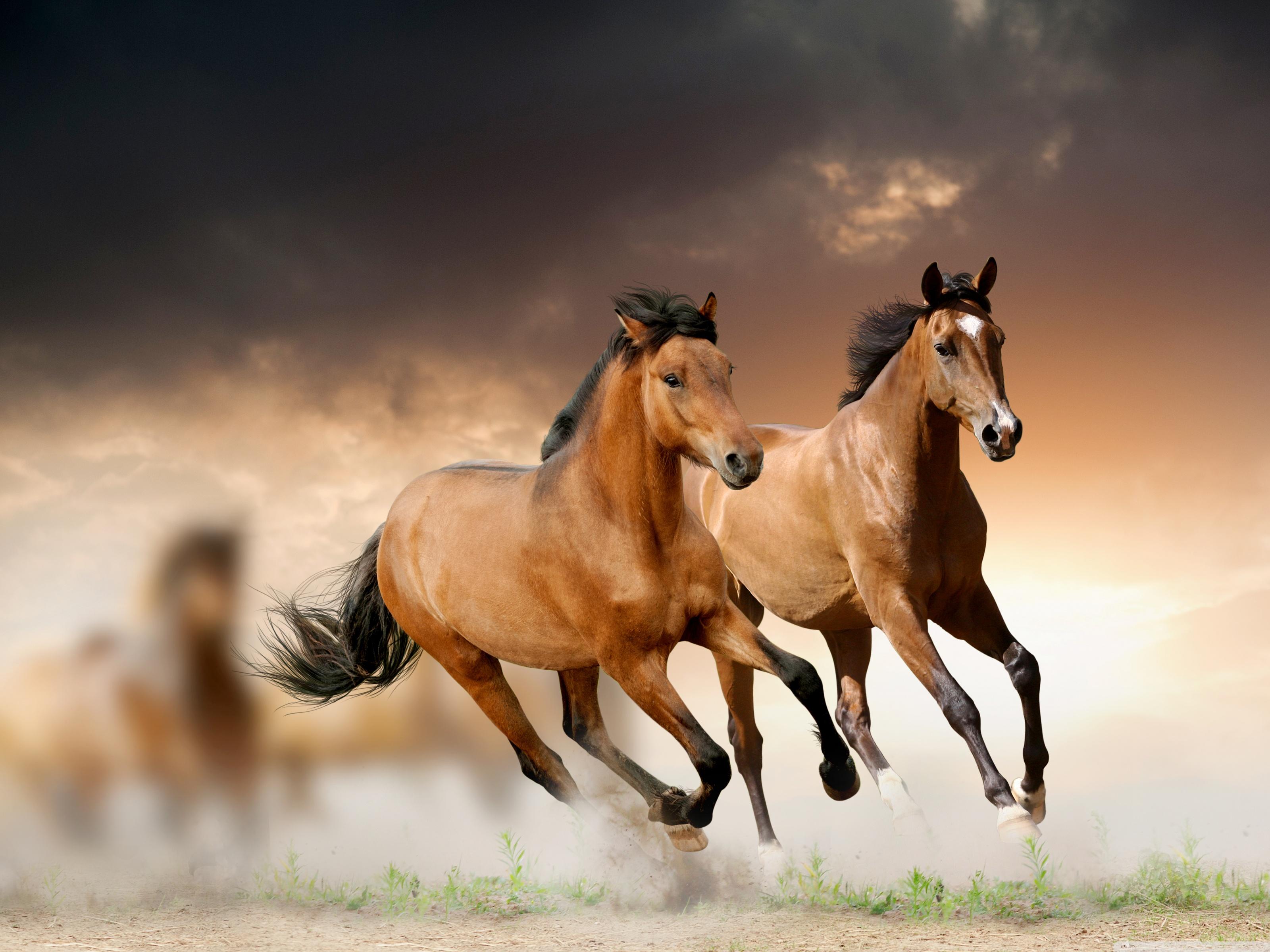 Horses Running 4K HD Desktop Wallpaper for 4K Ultra HD TV 3200x2400
