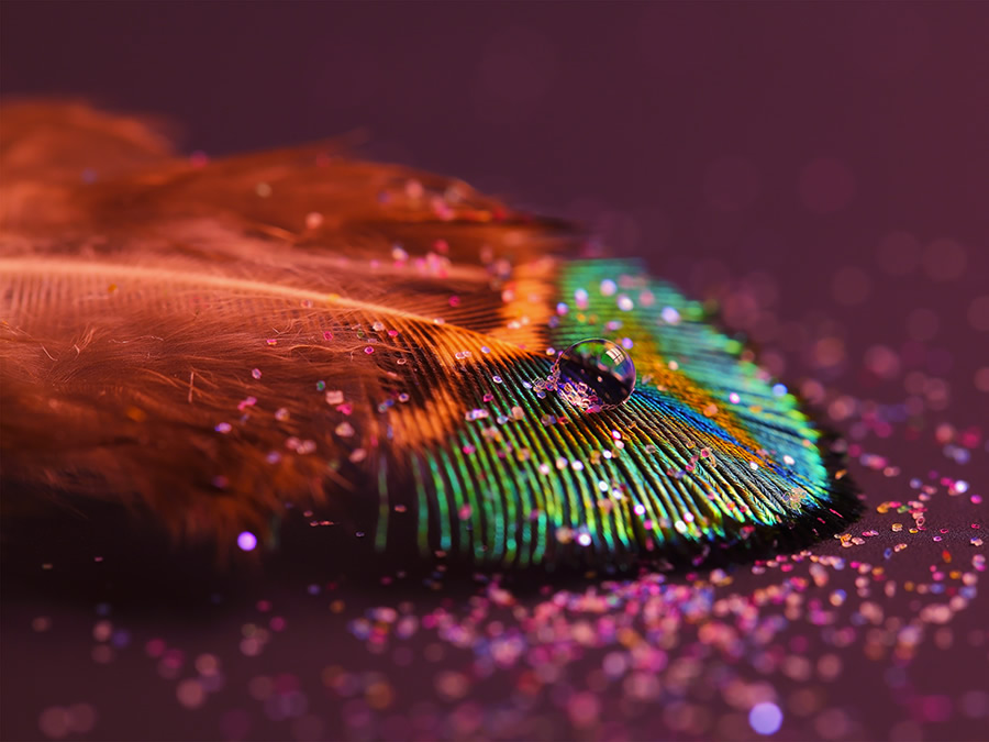great beautiful macro photography wallpapers for you Check it out 900x675