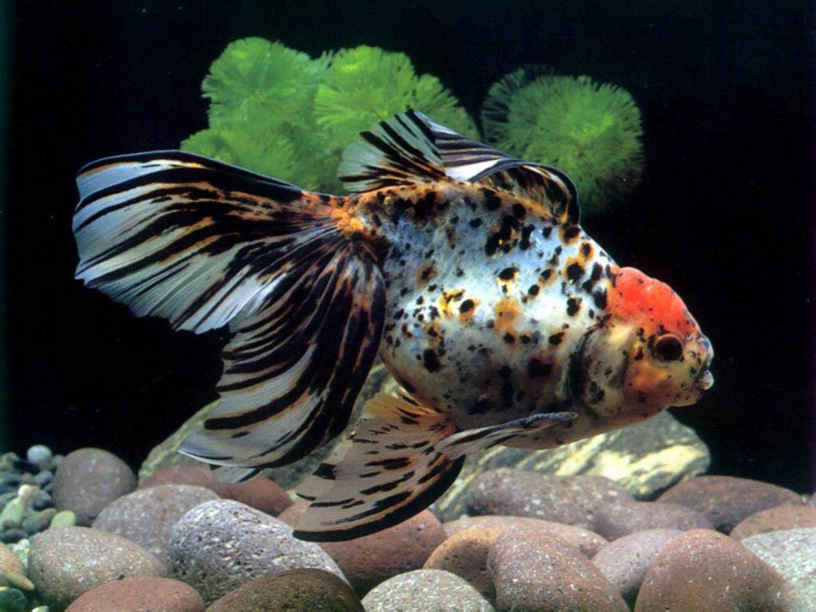 aquarium fish Wallpaper High Quality WallpapersWallpaper Desktop 1600x1200