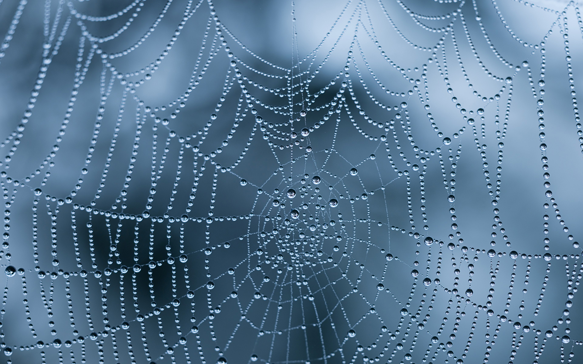 spiderweb wallpapers with water drops and ice HD Wallpapers 1920x1200