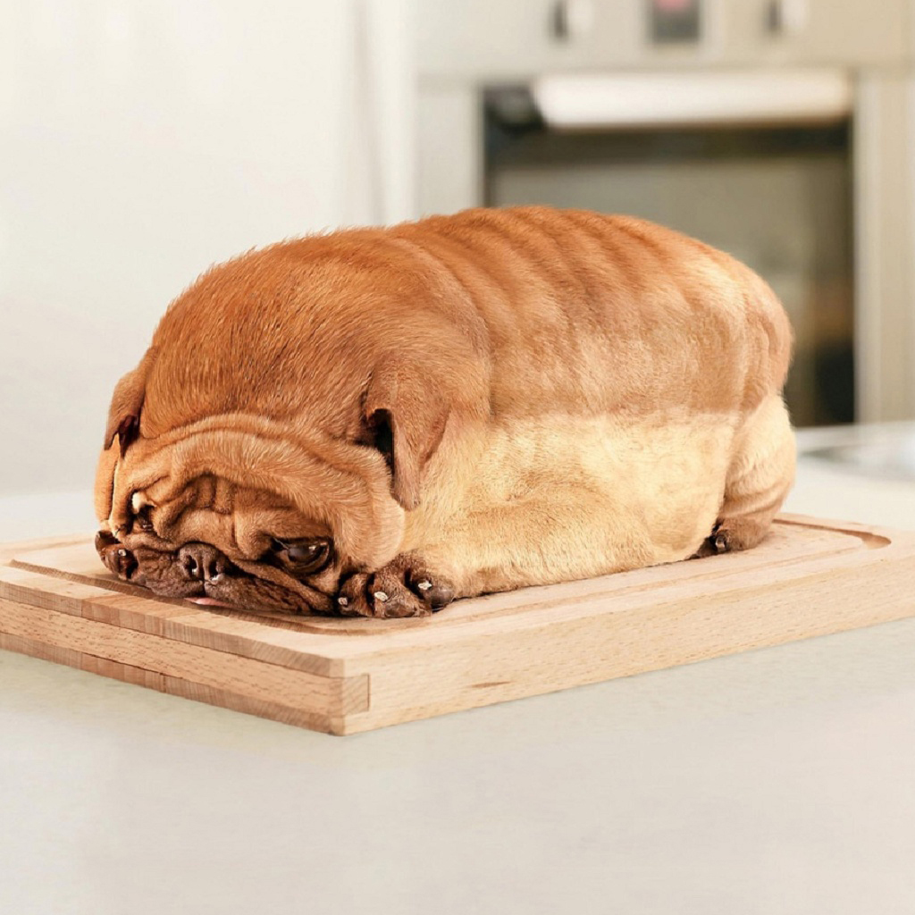 Free Download Loaf Of Dog Ipad Wallpaper Background And Theme