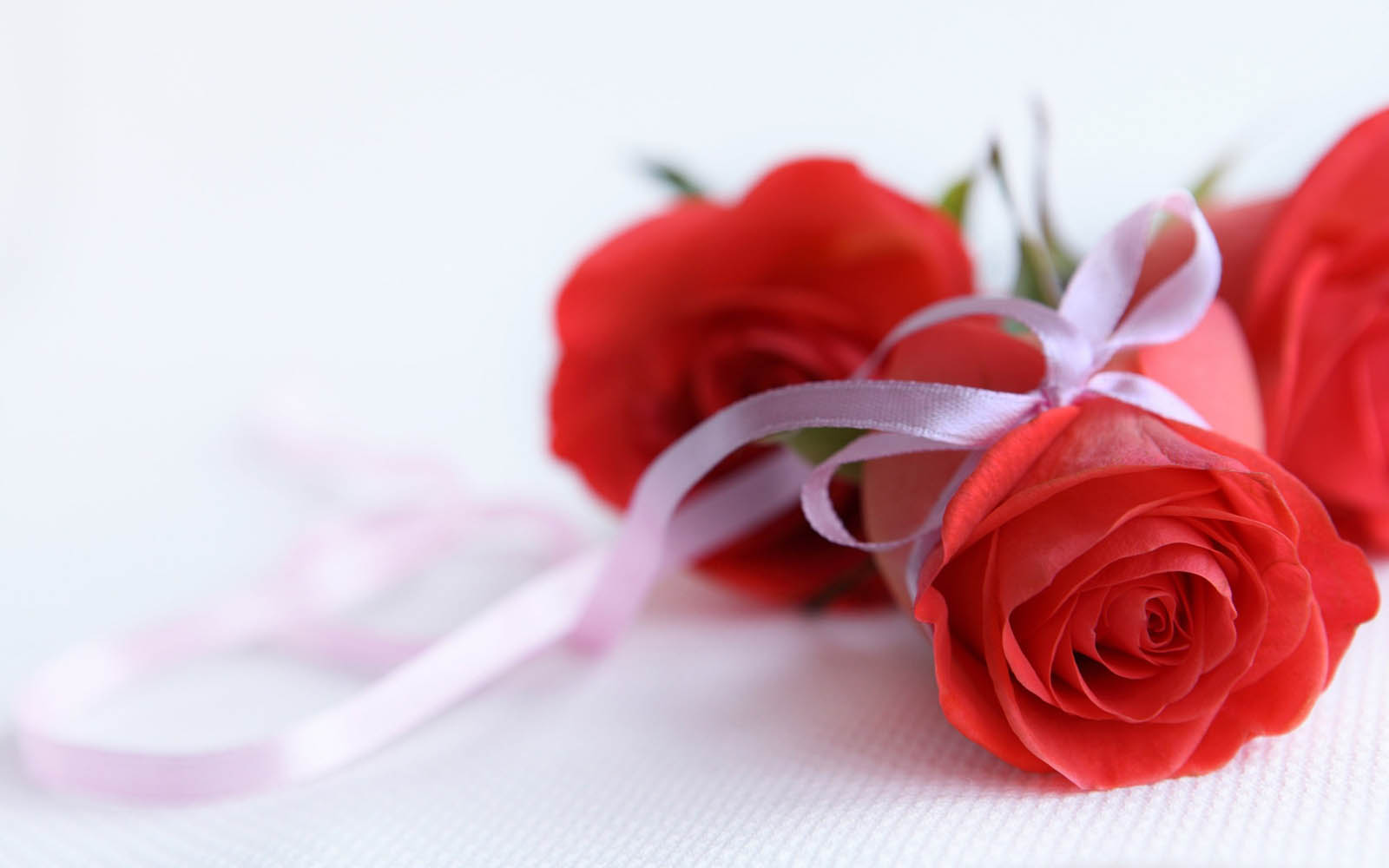 Tag Red Rose Wallpapers Images Photos Pictures and Backgrounds for 1600x1000