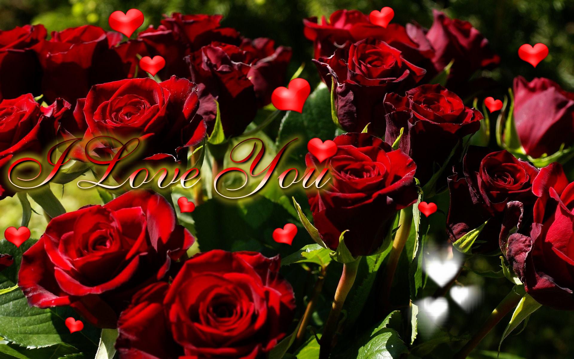 Фото самых красивых цветов для любимой