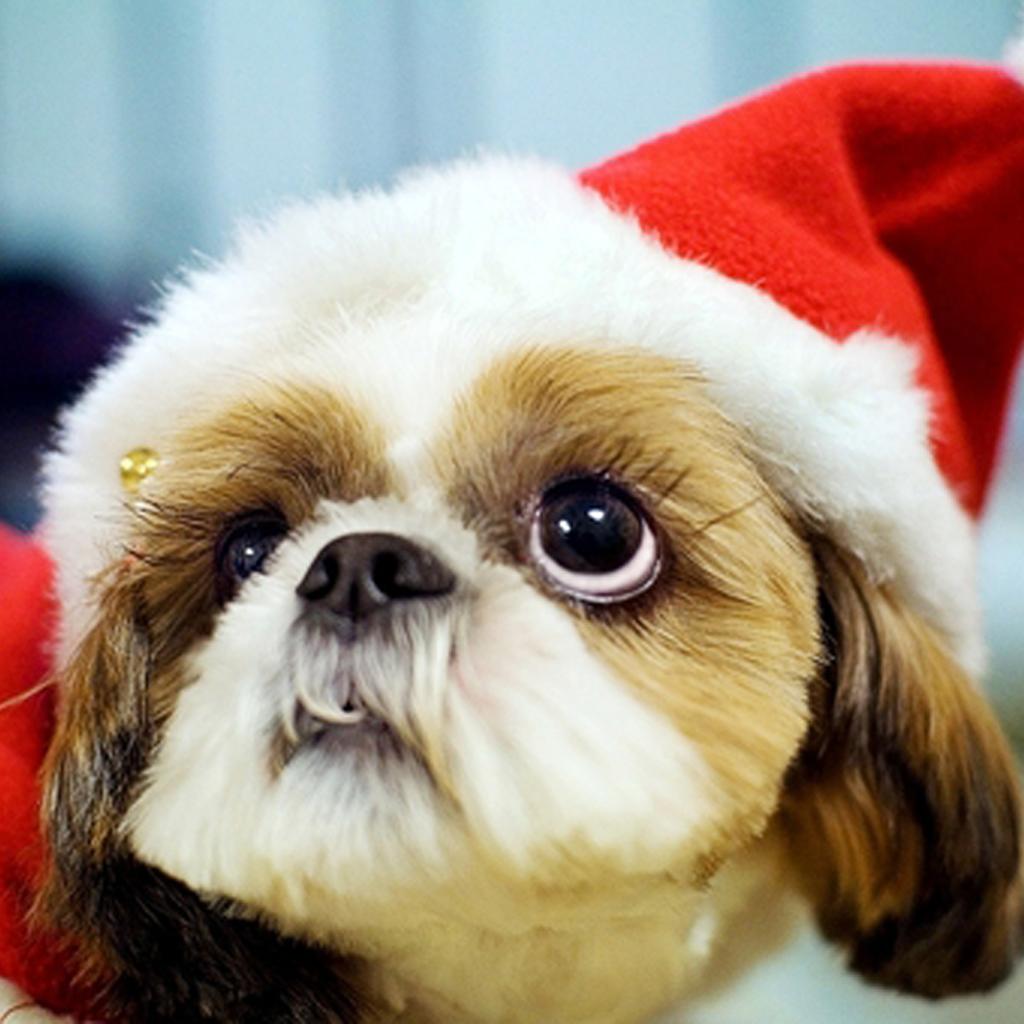 Christmas Dog Pictures Wallpaper - WallpaperSafari