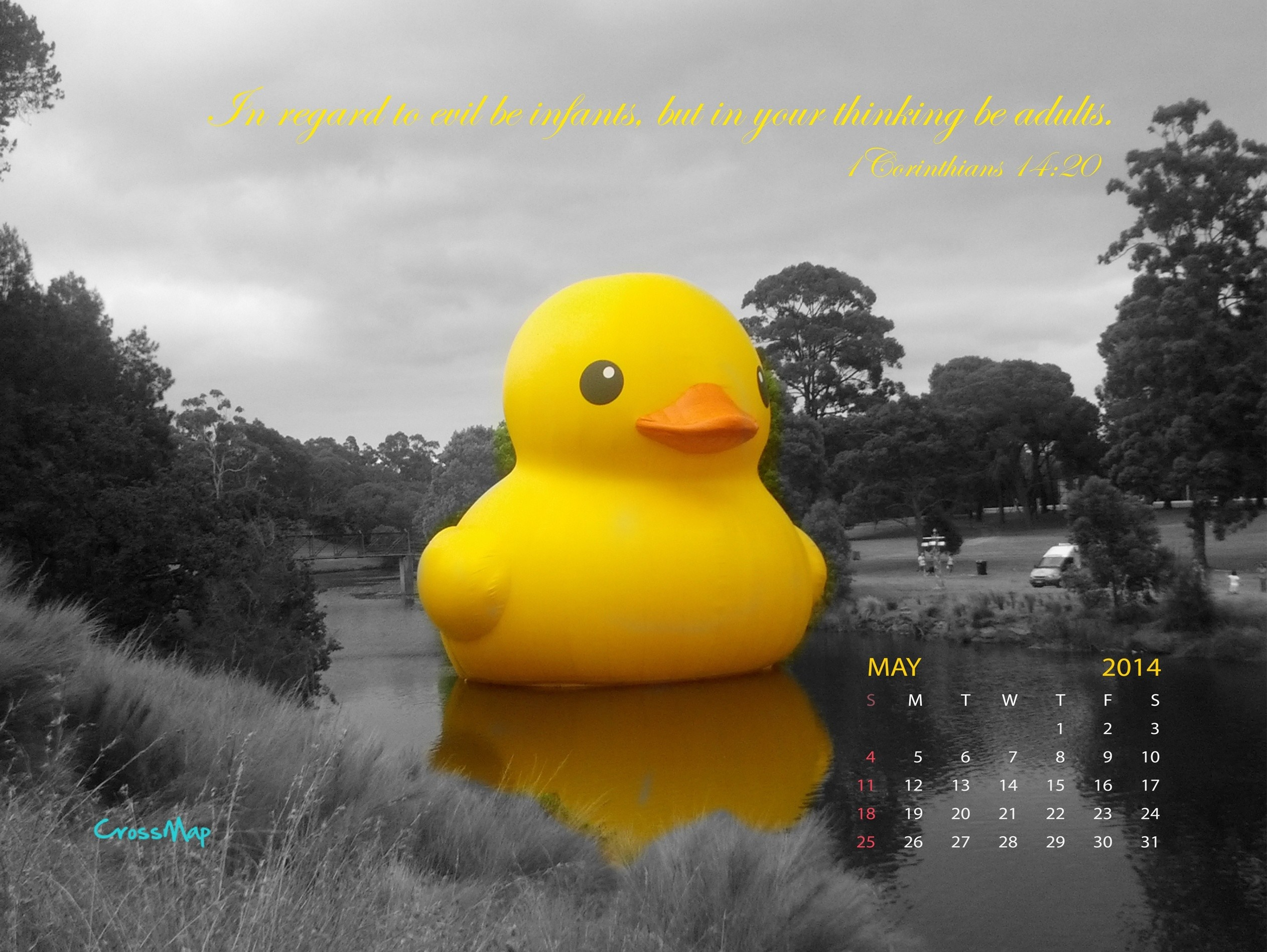 Rubber Duck Wallpaper 56 images 2525x1898
