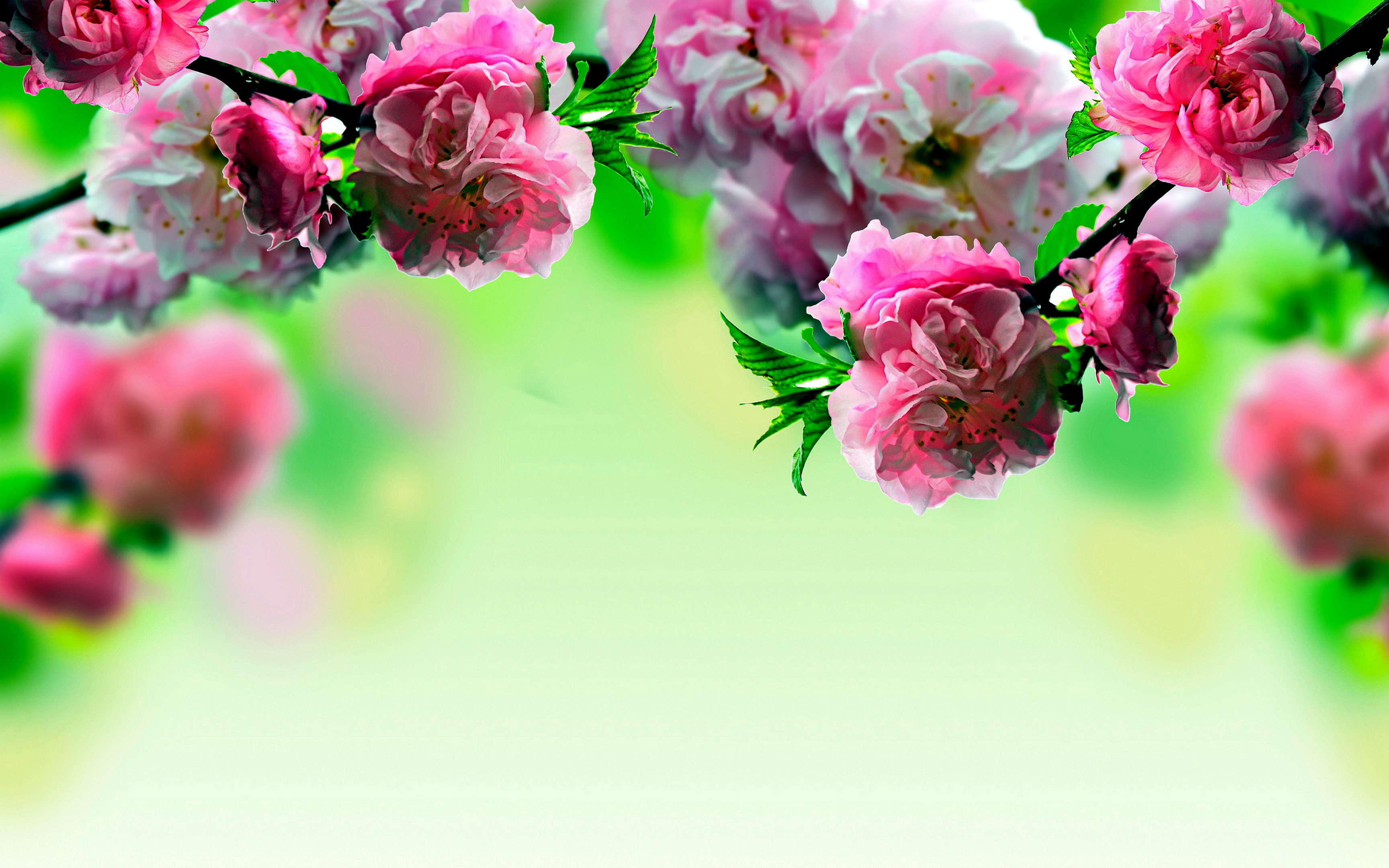 Spring Flowers Wallpapers 3456x2160