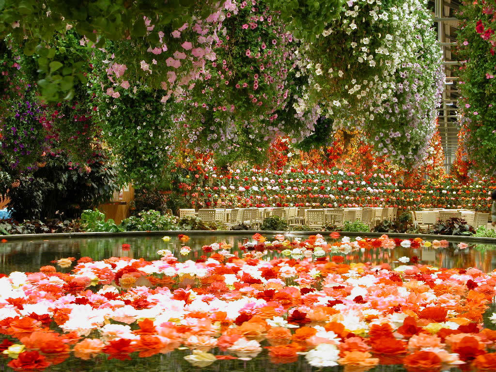 Flower Garden Wallpapers 1024x768