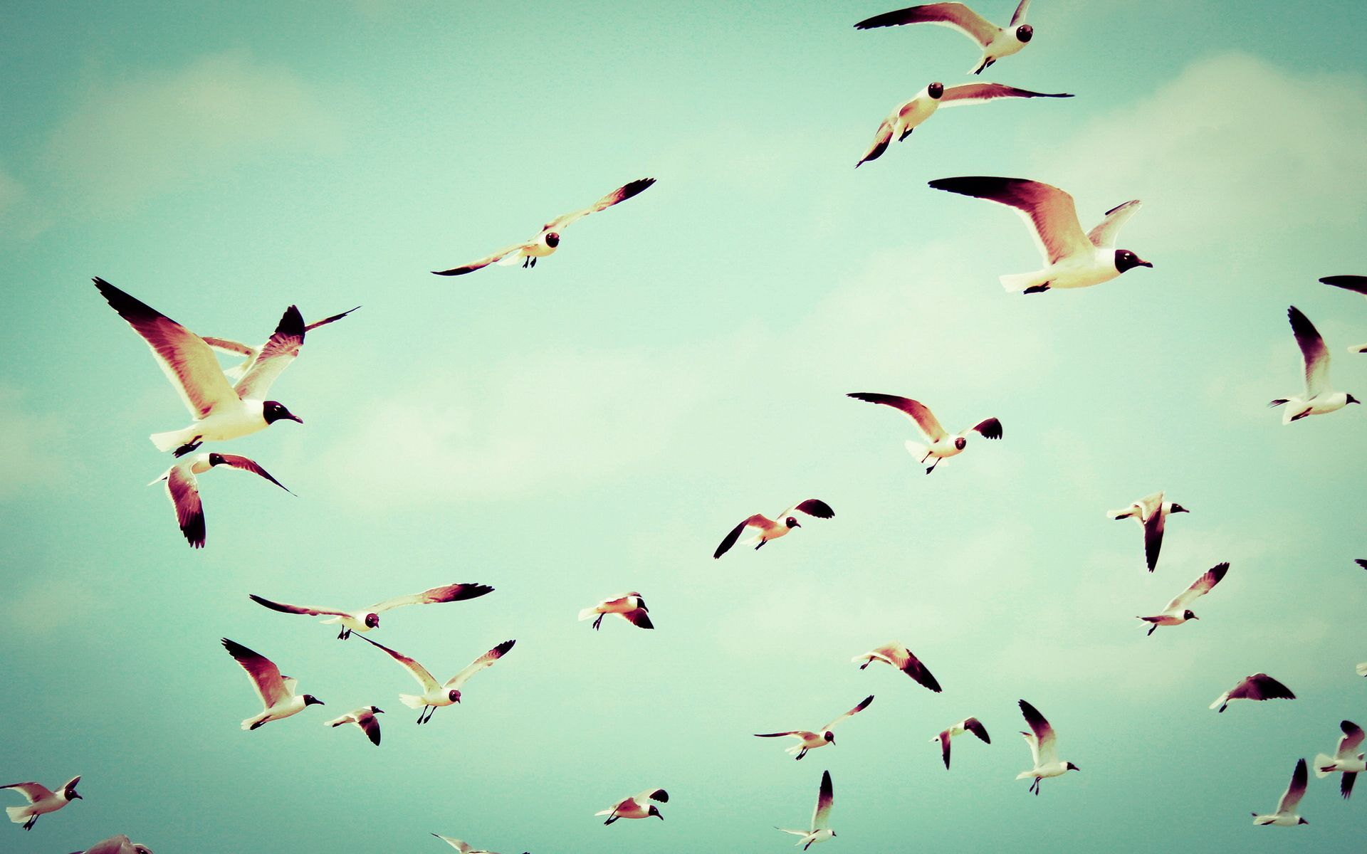 Birds Flying wallpaper high resolution Nature Birds wallpaper 1920x1200
