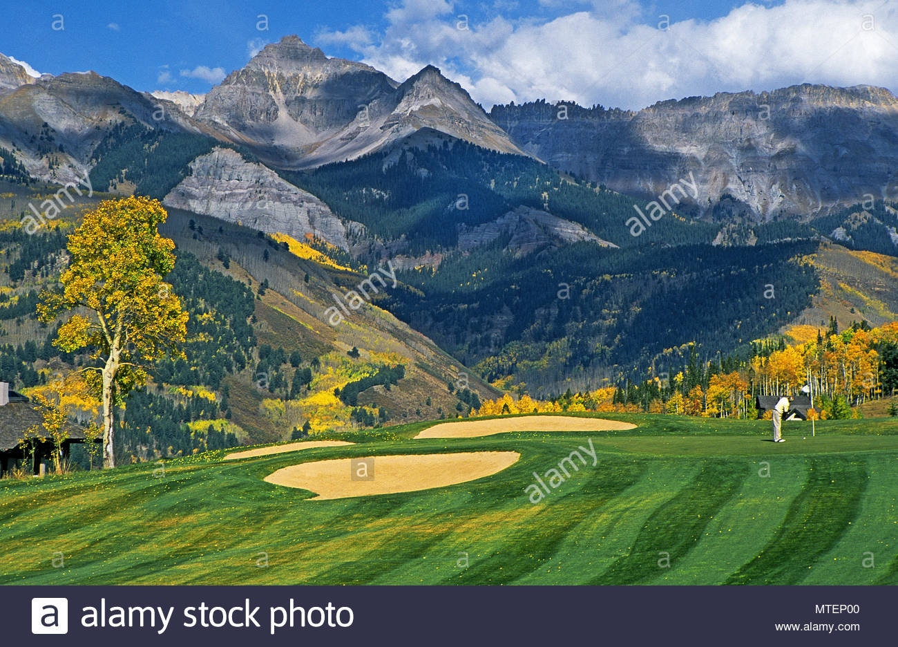 Aspen trees turn gold at the Telluride Golf Club above Telluride 1300x936