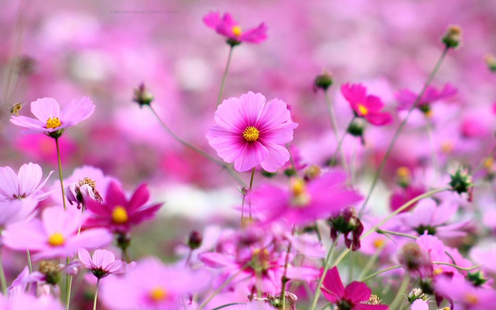 Free Download Beautiful Wallpapers For Desktop Purple Flowers Hd