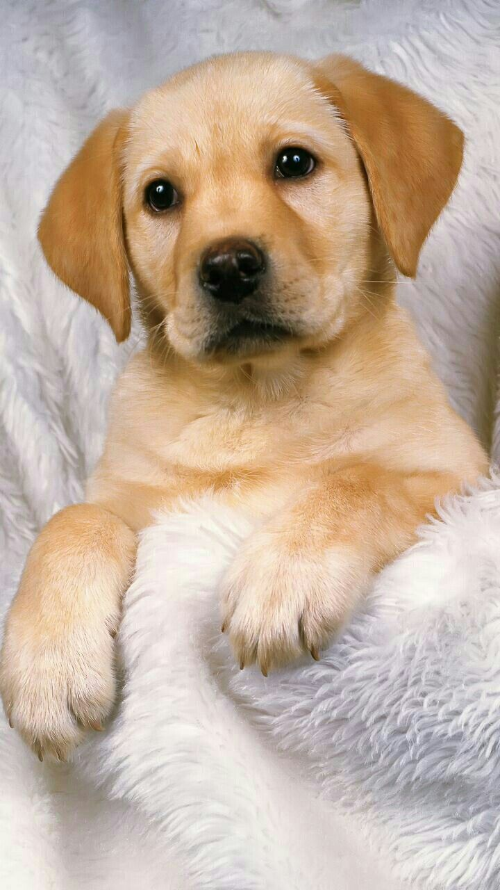 Dog Wallpapers are added Beautiful and cute dogs for your mobile 720x1280
