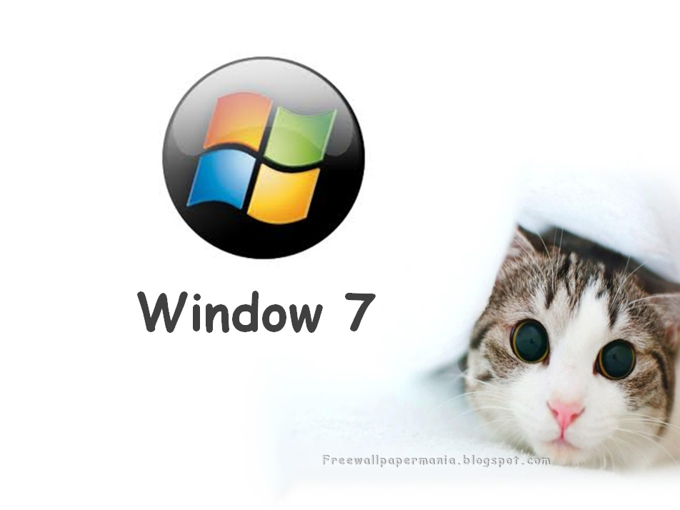 3d Live Wallpapers For Windows 7 Download   Cat Peek A Boo 952x714