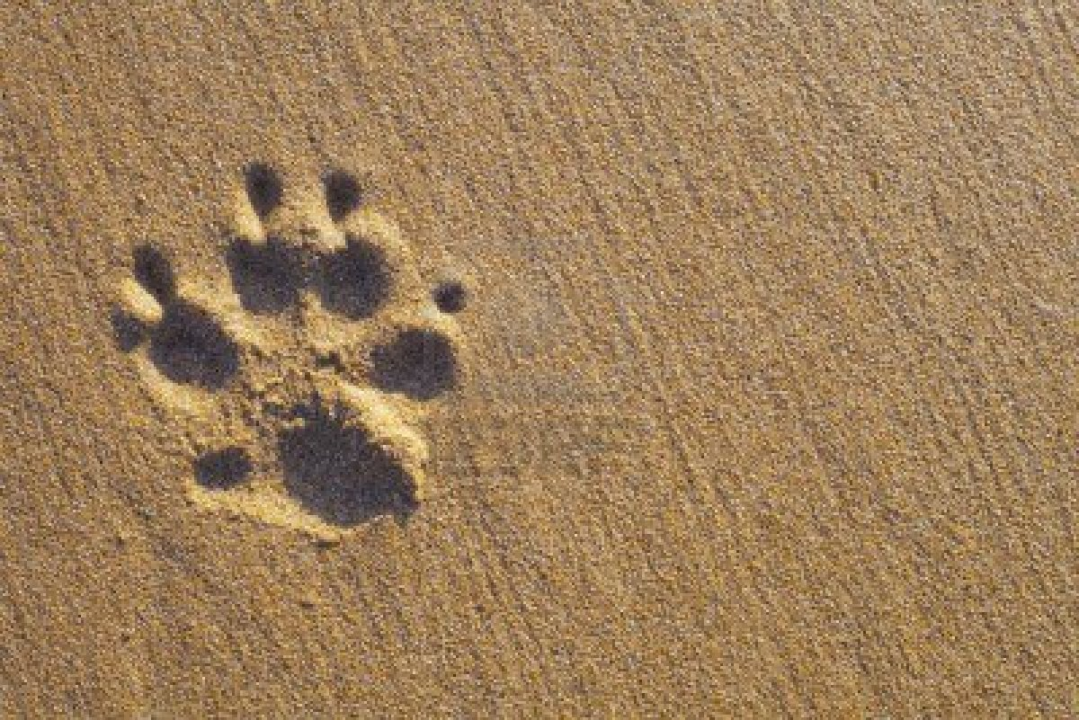 dog paws wallpaper wallpapersafari dog paw vector png dog paw vector art