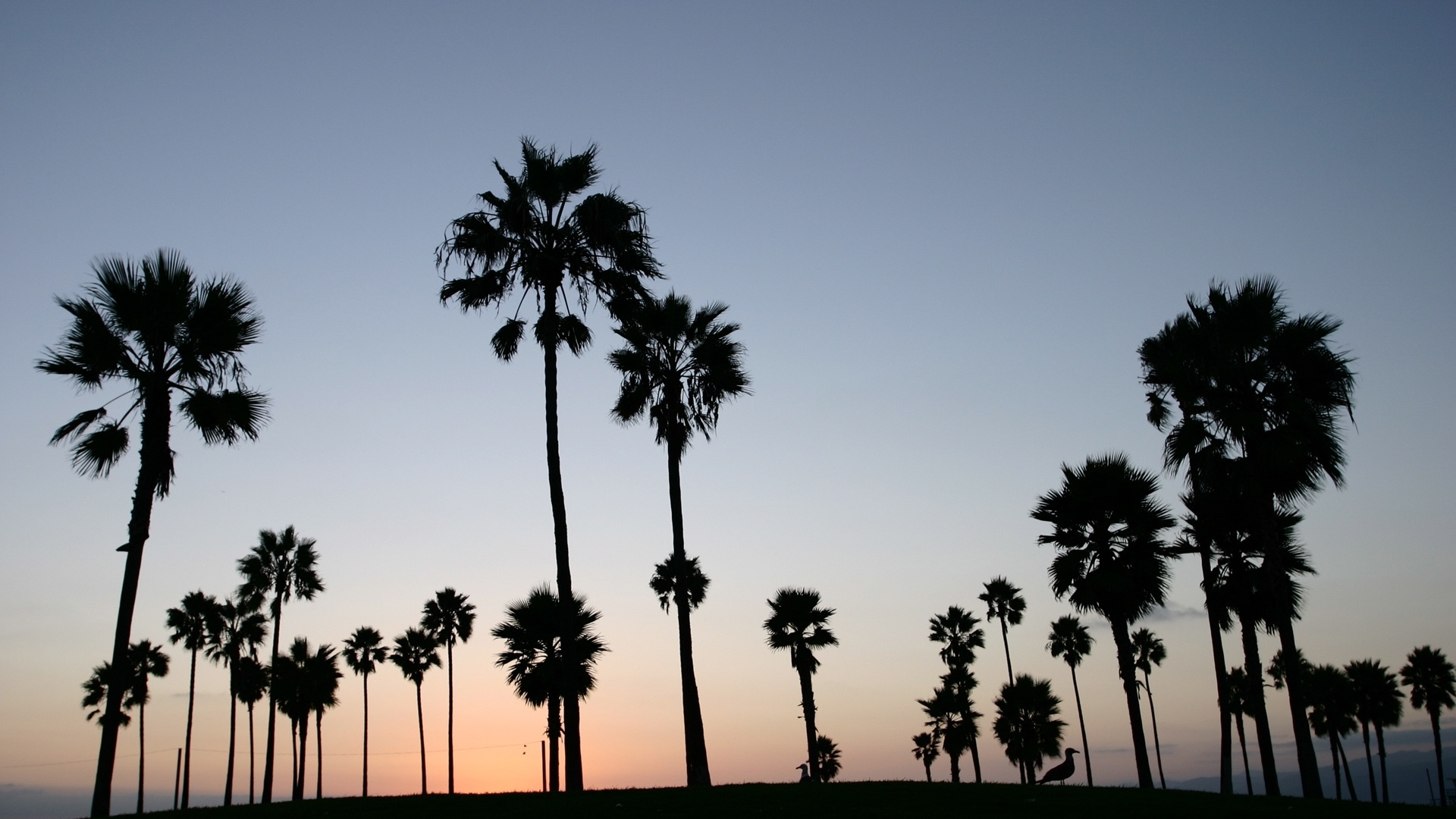 91] Venice Beach Wallpapers on WallpaperSafari 1920x1080