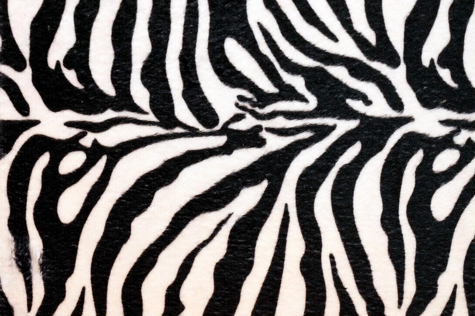 Amper Bae zebra print backgrounds 1600x1066