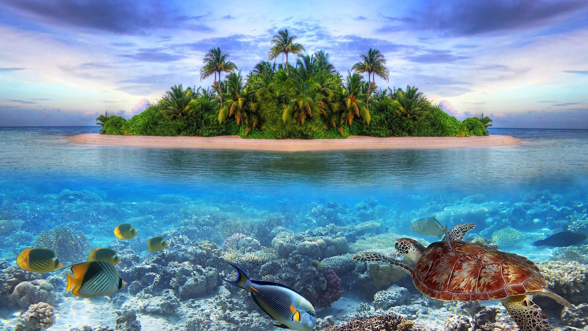 Marine life Tropical island 4K Ultra HD wallpaper 4k WallpaperNet 1920x1080