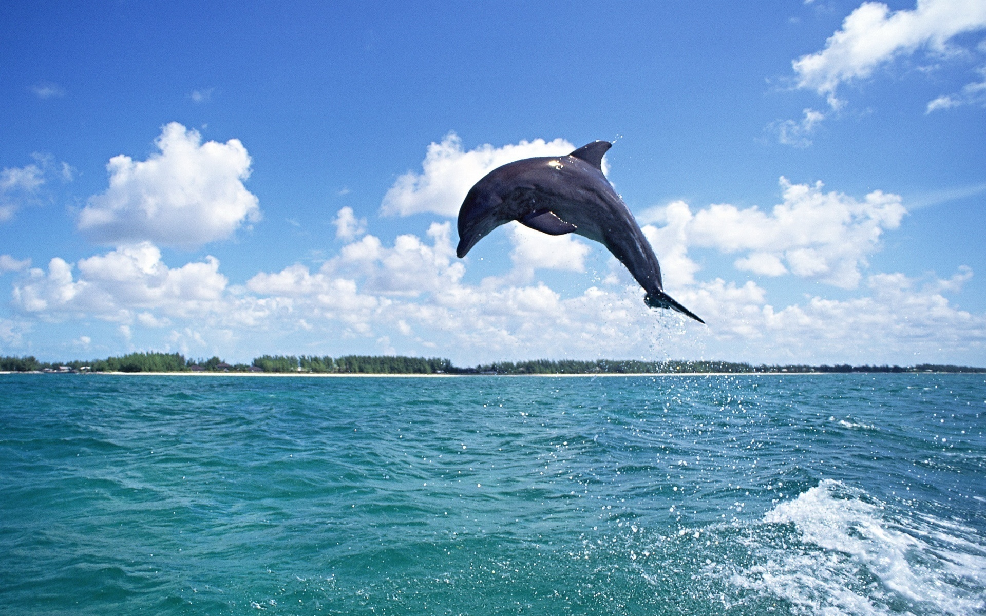 wallpapers dolphin jump sea animals photo 1920x1200 animals 1920x1200