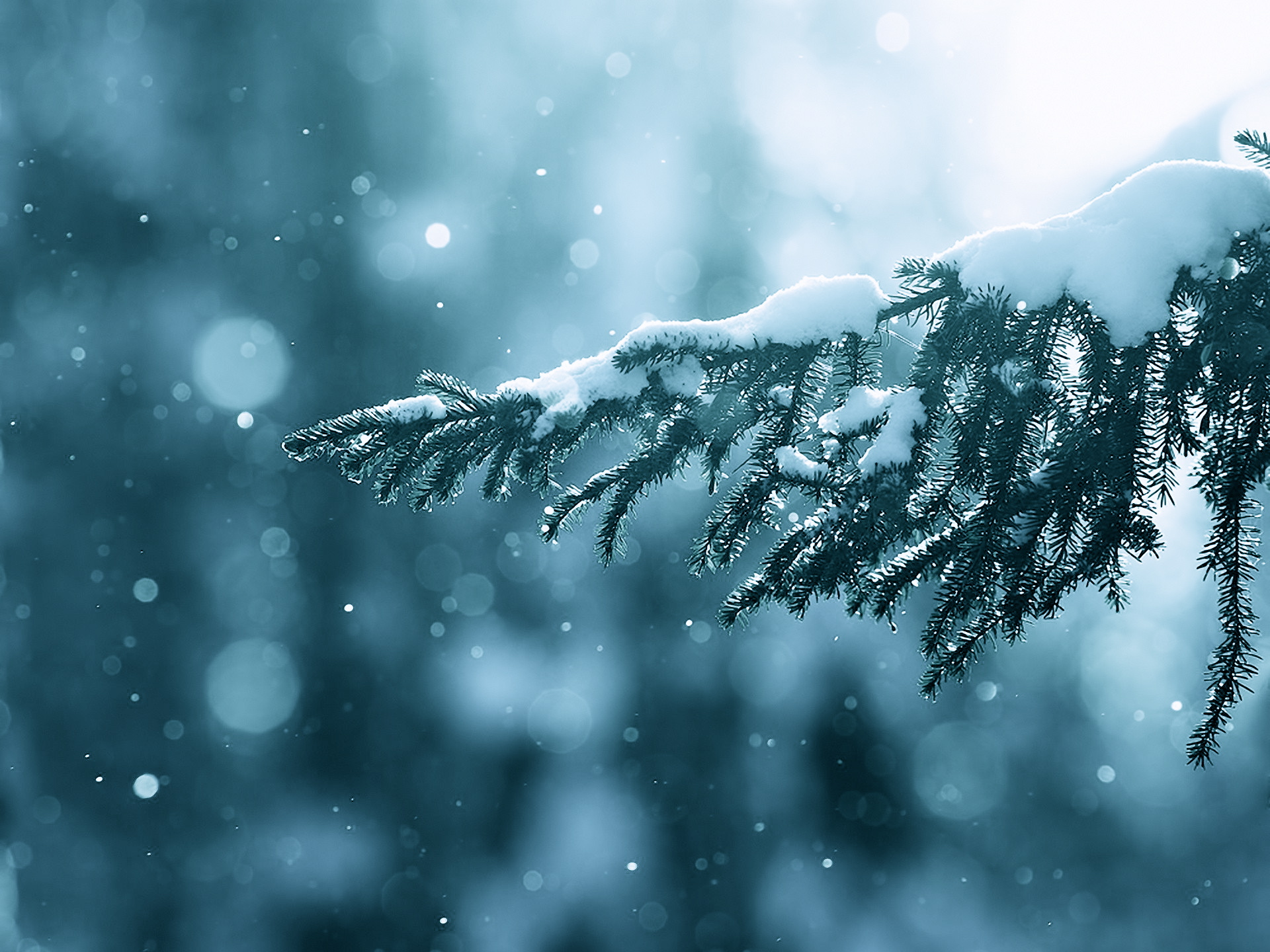 Free Download Winter Snow Wallpapers Mobile Nature Wallpaper