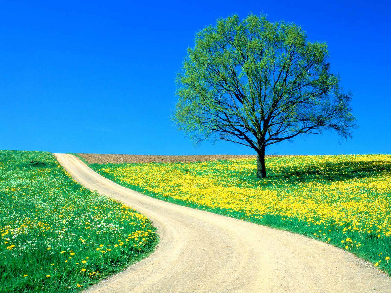 Spring HD Wallpapers 1600x1200