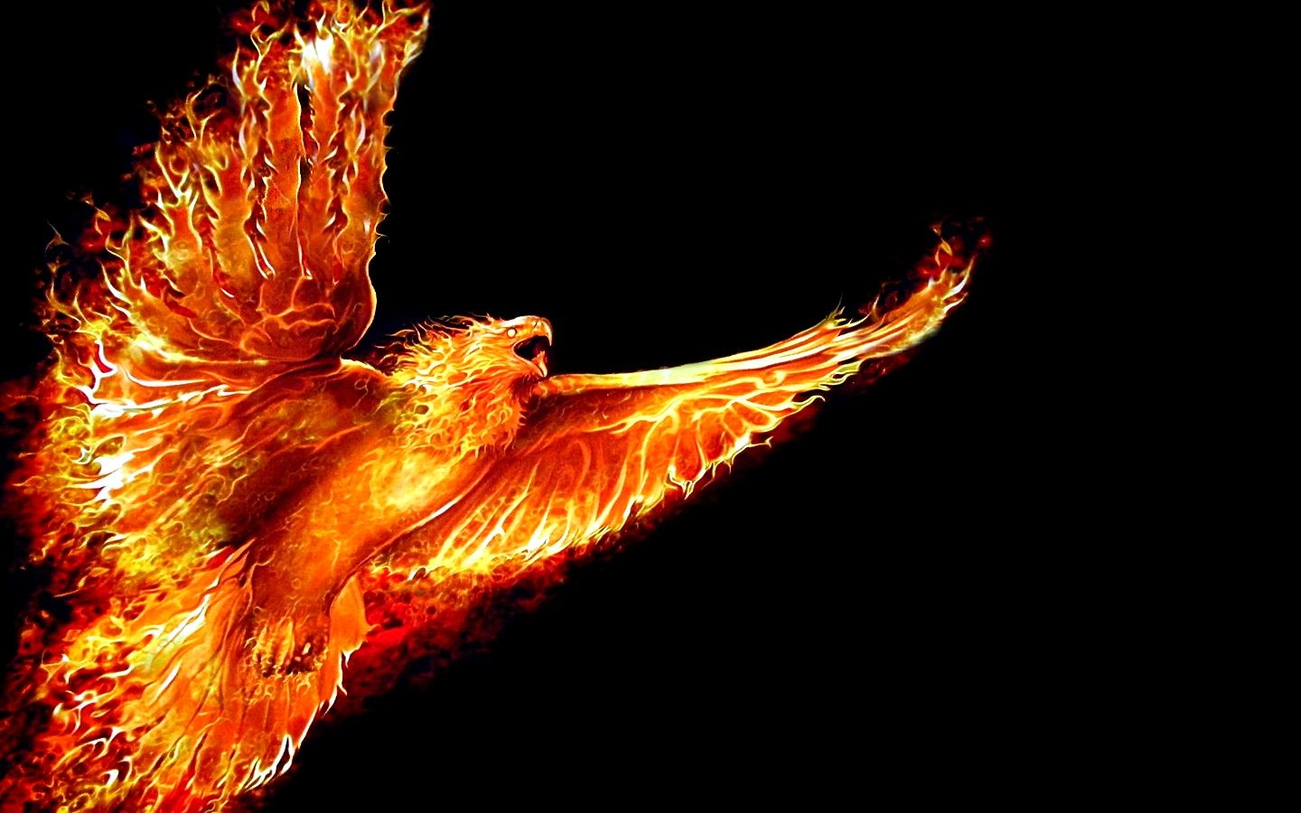 The Phoenix Rises On Coming Back and Moving Forward Cover Lay 1440x900