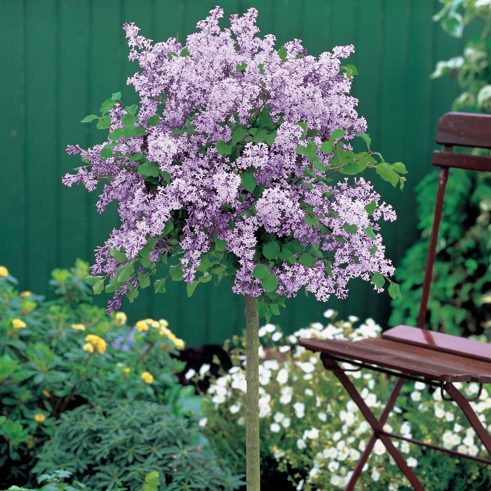 Flowers in FlowerPix five flowering container garden plants for sun 1889x1889