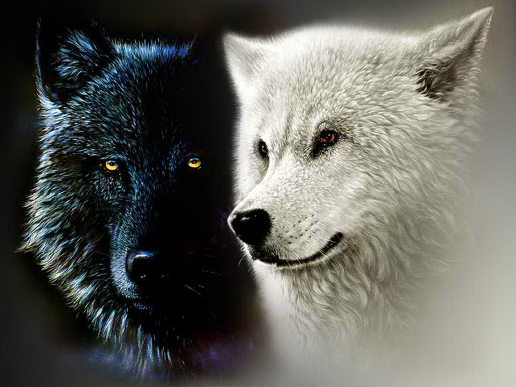 White Wolf And Black Wolf In Love Black and White Wolf W...